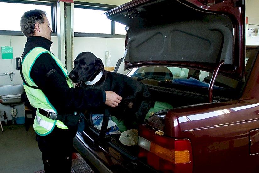 Narkohunde sender ung smugler 12 år i fængsel